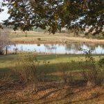 CC wetland view